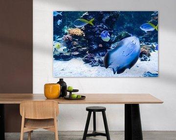exotische vissen van Babetts Bildergalerie