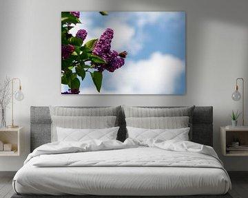 Atalanta vlinder zittend op paarse seringen van JM de Jong-Jansen