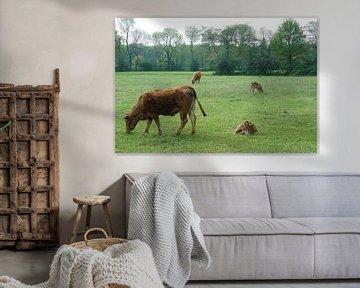 Kühe im Frühling von Herman Peters