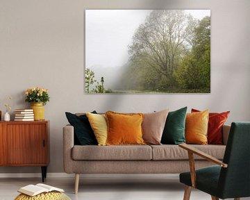 grote boom in de mist van Tania Perneel