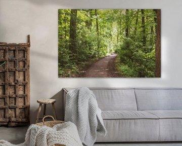 abstracte boswandeling van Tania Perneel
