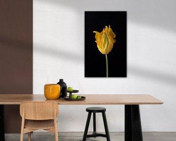 Gele papegaai tulp van Gaby Hendriksz