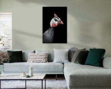 Kalkoen: Portret grappig kuikentje van Marjolein van Middelkoop