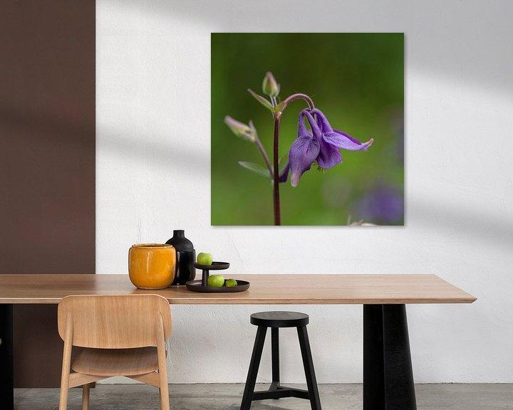Beispiel: lila Akelei im Garten von anne droogsma