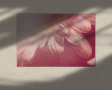 Zarte Blütenblätter von Roswitha Lorz