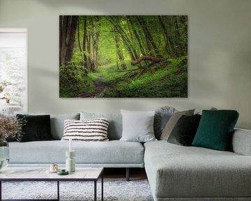 Regendag in de bossen van Hogne bij Marche-en-Famenne van Peschen Photography
