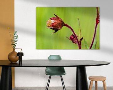 Bloemendroom 3 van t.ART