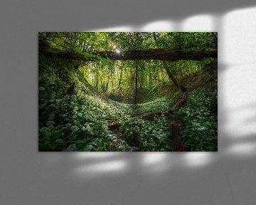 De jungle van Martin Podt