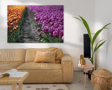 Tulpenveld van Esther Leijten-Kupers