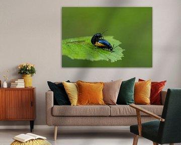 Aldercocks im Frühjahr von Ronald Mallant