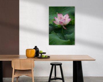 Lotusblume von Sofie Bogaert