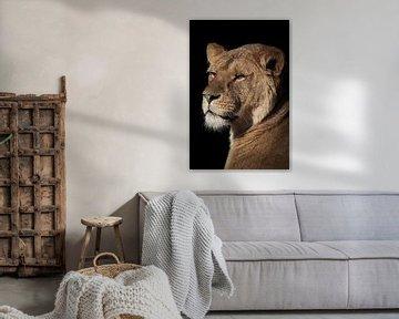 Leeuwen: leeuwin portret