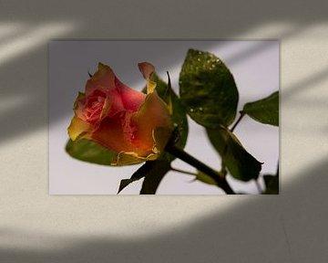 Du schenkst Liebe mit einer Rose von JM de Jong-Jansen