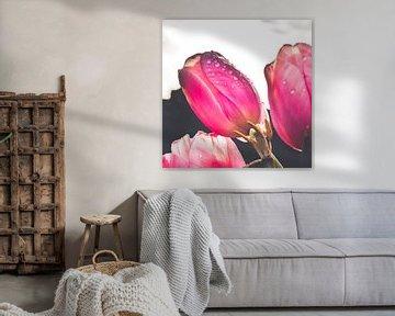 Rosa Tulpen mit Wassertropfen von Photography by Naomi.K