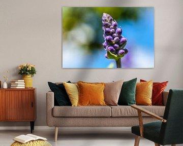 Nahaufnahme auf einzelne Lavendelblüte mit unscharfem Hintergrund von pixxelmixx