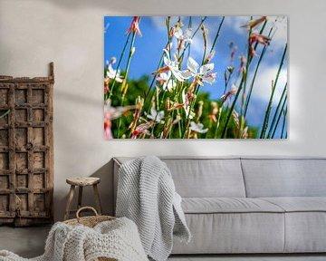 Filigrane Blüten gegen blauen Himmel von pixxelmixx