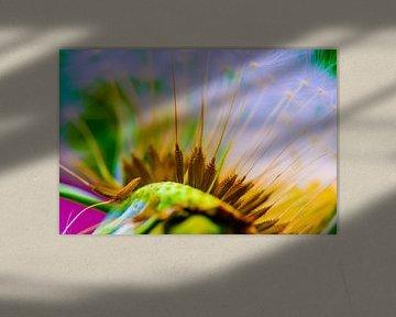 Photo macro de graines de pissenlit sur un fond coloré sur pixxelmixx