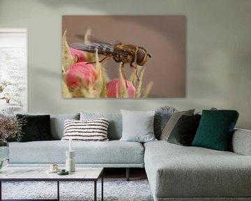 Waldschwebfliege auf Birnenblüte von H. van Dodeweerd
