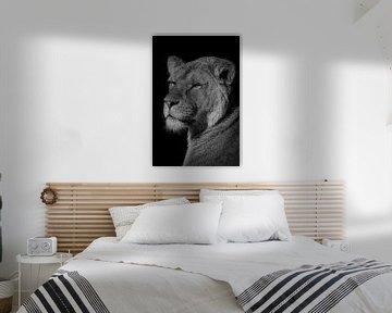 Leeuw: portret van een mooie leeuwin in zwart-wit