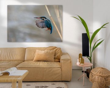 Eisvogel im Flug von Willem Hoogsteen