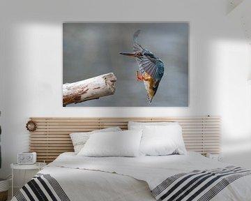 Eisvogel von Willem Hoogsteen