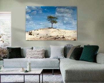 Gui sur une dune dans l'Aekingerzand sur Jan-Willem van Rijs
