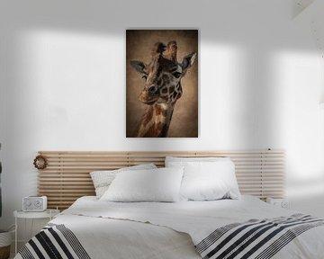 Giraffe: portret van een mooie giraffe in bruin