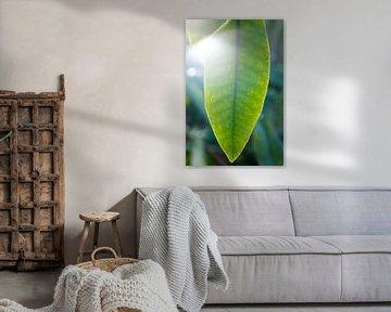 Grüne Blätter des Rhododendrons | Fine Art Naturfotografie | Botanische Kunst von Karijn | Fine art Natuur en Reis Fotografie