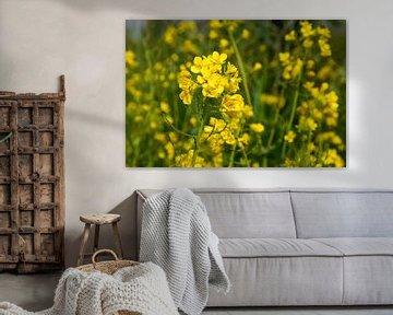 Mellow Yellow van Ingrid de Vos - Boom