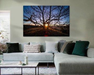 Sonnenuntergang durch Hohlraum zwischen Geometrischen Bäumen von John Ozguc