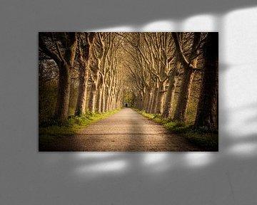 Laan op landgoed Haanwijk van Marcel Bakker