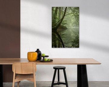 Dschungel von Rob Willemsen
