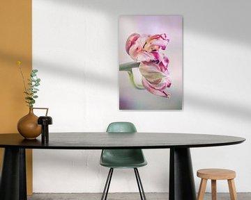 Tulpe geblüht von natascha verbij