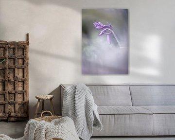 Waldhyazinthe im Nebel von natascha verbij