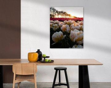 Holländische Tulpen bei Sonnenuntergang von Saranda Hofstra