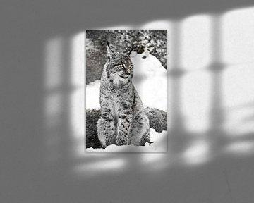 Der Luchs der Stadt sitzt senkrecht im Schnee und schaut mit großen, klaren Augen genüsslich auf and von Michael Semenov