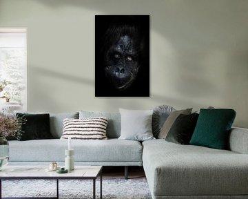 Gesicht Orang-Utan Nahaufnahme. Phlegmatischer leicht ironischer Augenaufschlag. Dunkler, schwarzer  von Michael Semenov