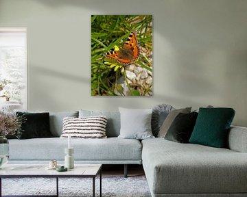 Kleine vos vlinder von Ben Hoftijzer