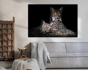 Katze und Kätzchen.ruhig ruhen von Faulheit, aber der Blick ist eine schlaue, dunklen Hintergrund. von Michael Semenov