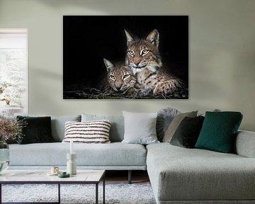 Katze und Kätzchen. ruhig ruhen; ein dunkler Hintergrund ist ruhig und zuversichtlich beobachten. Du von Michael Semenov