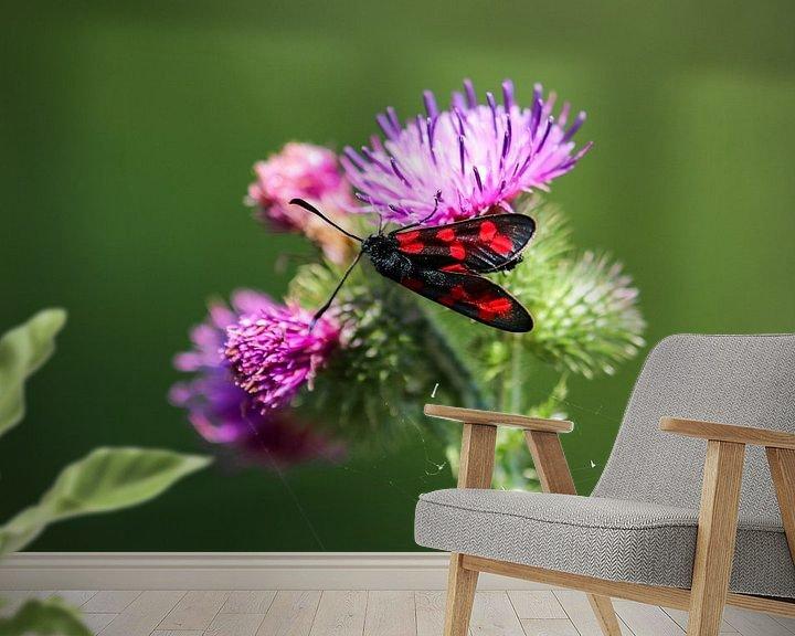 Impression: pastel à six points sur une fleur de chardon sur Reiner Conrad