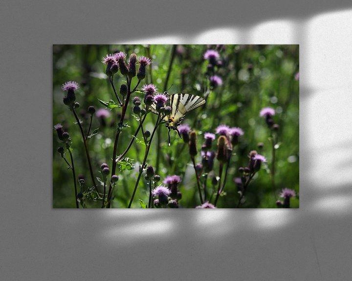 Beispiel: Segelfalter auf einer Distelblüte von Reiner Conrad