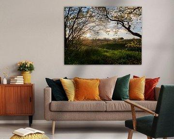 Untergehende Sonne, die durch die Bäume scheint von Karin Schijf