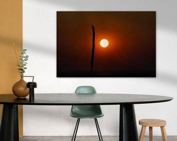 Sonnenuntergang mit einzelnem Grasshalm von David Esser