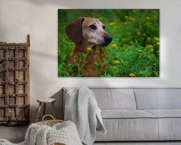 Prachtig portret van een oudere hond van Chantal
