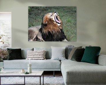 Brullende leeuw van Peter Mooij