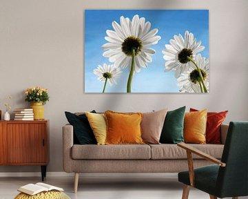 Gänseblümchen an einem sonnigen Tag mit blauem Himmel von Tanja Udelhofen