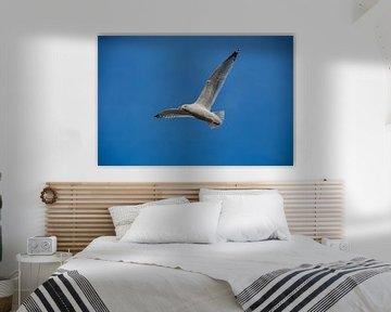 Möwe mit aufgespannten Flügeln von David Esser