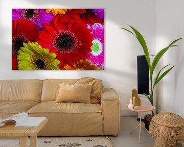 Kleurrijke gerbera's. Fleurige bloemen aan de muur. van GiPanini