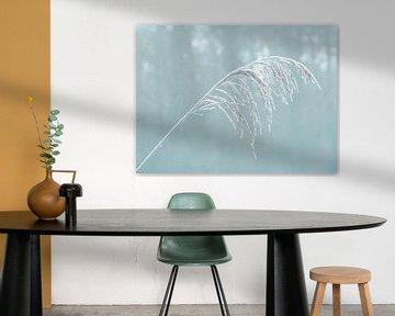 Icy Grass (Gras met IJs in Petrol) van Caroline Lichthart